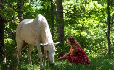 Corso di Animal Communication – sessioni di pratica aggiuntive