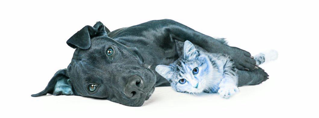Trattamenti agli Animali