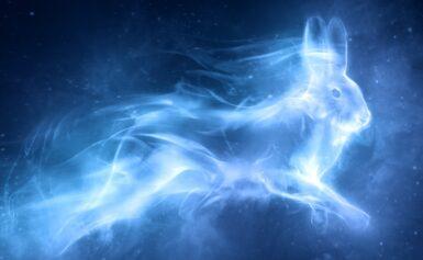 Programma di Terapia Spirituale per Animali