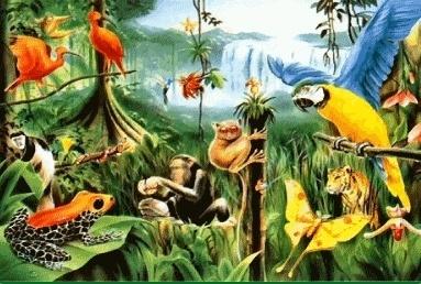 Rainforest Reiki