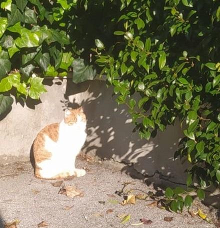 """Corso di Animal Communication """"Come Condurre Ricerche di Animali Smarriti"""""""